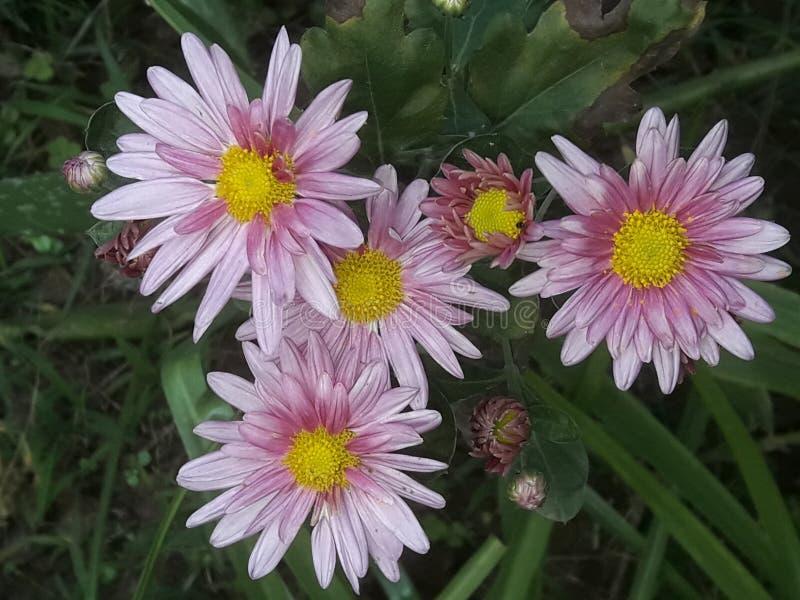Bloeiende bloem royalty-vrije stock foto's