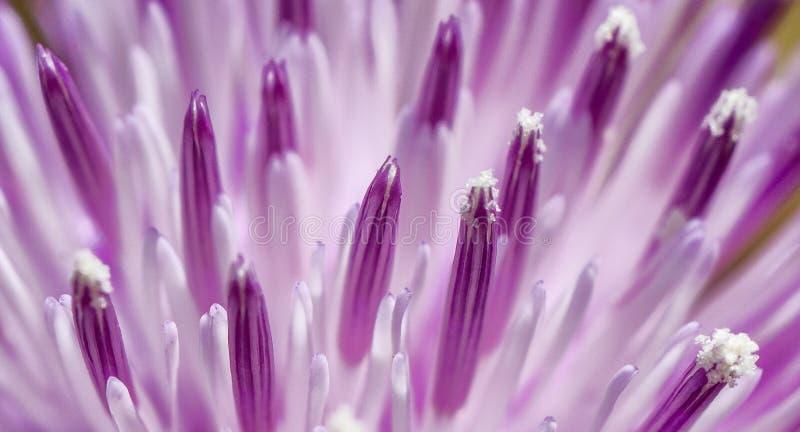 Bloeiende bloem in landschap stock afbeeldingen