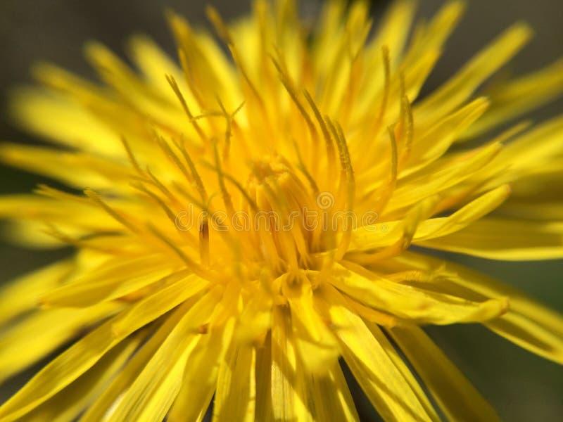 Bloeiende Bloemen stock afbeeldingen