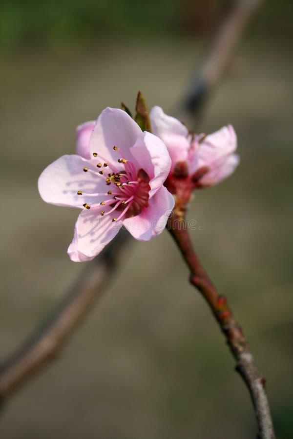 Bloeiende bloemen royalty-vrije stock foto