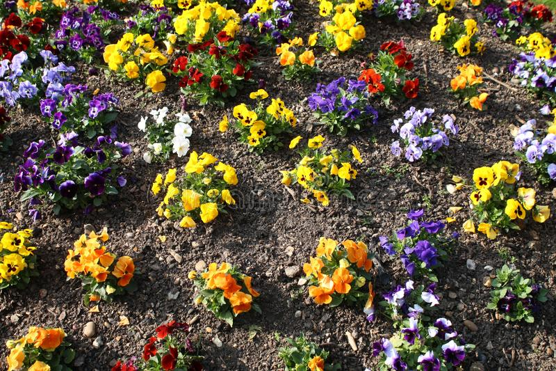 Bloeiende bloemen aan het begin van de lente royalty-vrije stock fotografie