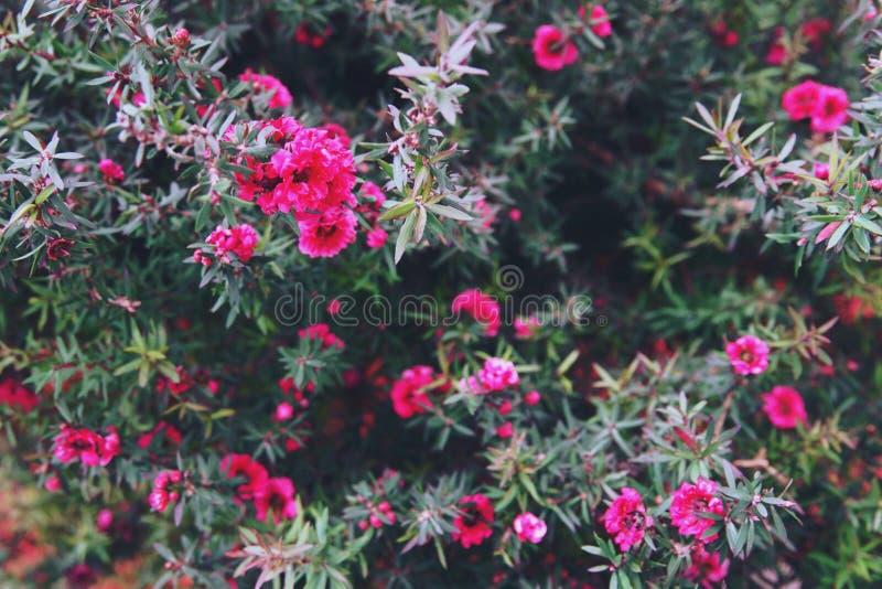 Bloeiende bloemen en boom in Bloemkoepel bij Tuinen door de Baai, Singapore stock fotografie