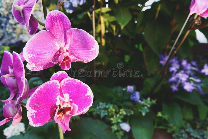 Bloeiende bloemen en boom in Bloemkoepel bij Tuinen door de Baai, Singapore stock foto