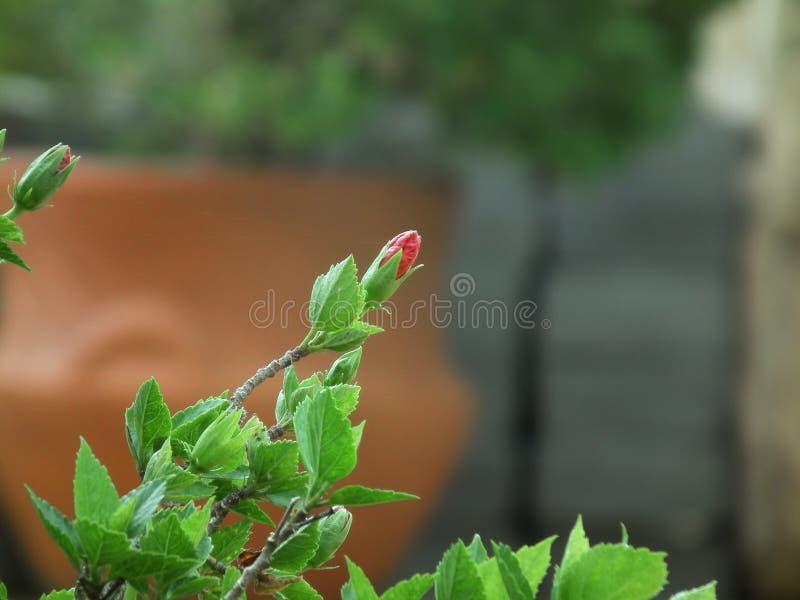 Bloeiende bloemknop royalty-vrije stock foto's