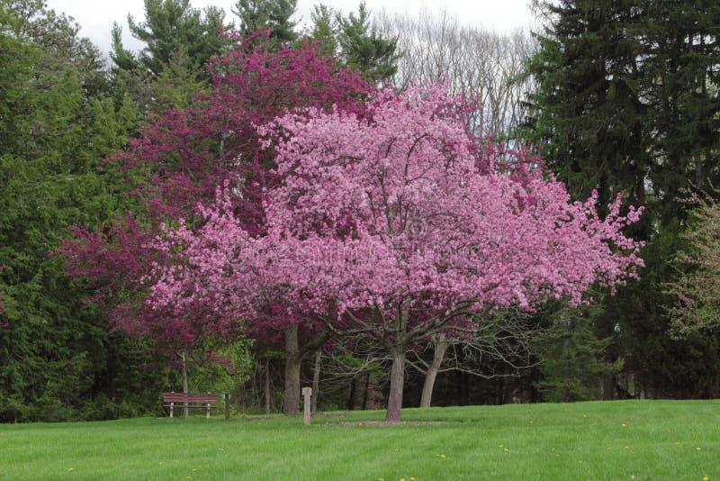 Bloeiende bomen in bloesem bij een park royalty-vrije stock foto's