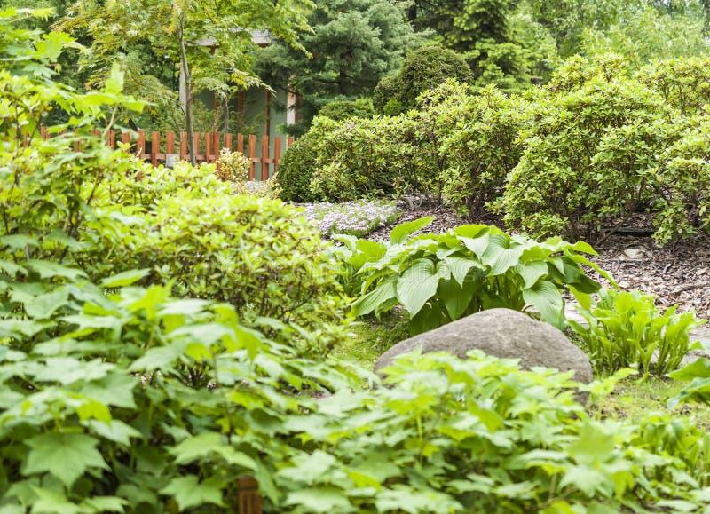 Bloeiende bomen in de de zomertuin stock fotografie