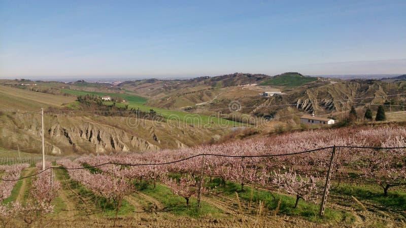 Bloeiende bomen in Italië royalty-vrije stock afbeeldingen