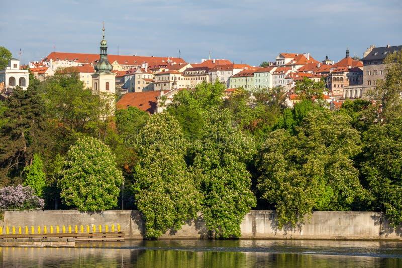 Bloeiende bomen over de rivier, in de achtergrondhuizen boven het Kasteel van Praag royalty-vrije stock foto