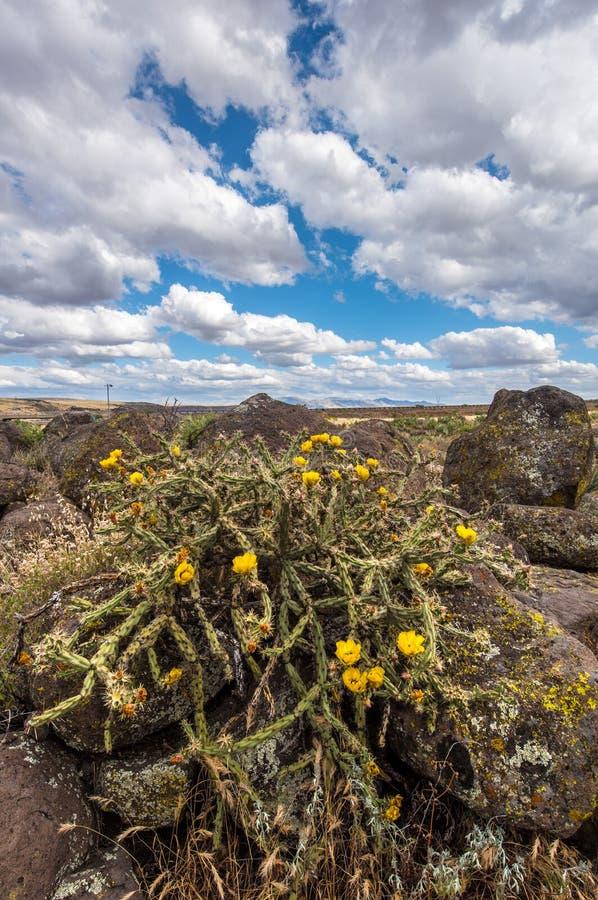 Bloeiende cactus met gezwollen witte wolken en blauwe hemel royalty-vrije stock fotografie