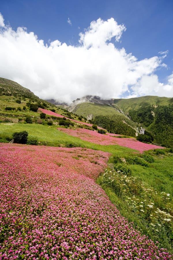 Bloeiende gebieden van Nepal royalty-vrije stock foto