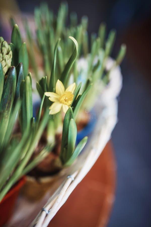 Bloeiende gele bloemen royalty-vrije stock afbeelding