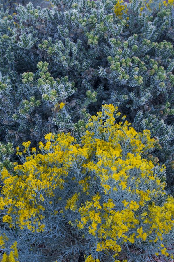 Bloeiende gele woestijncactus stock fotografie