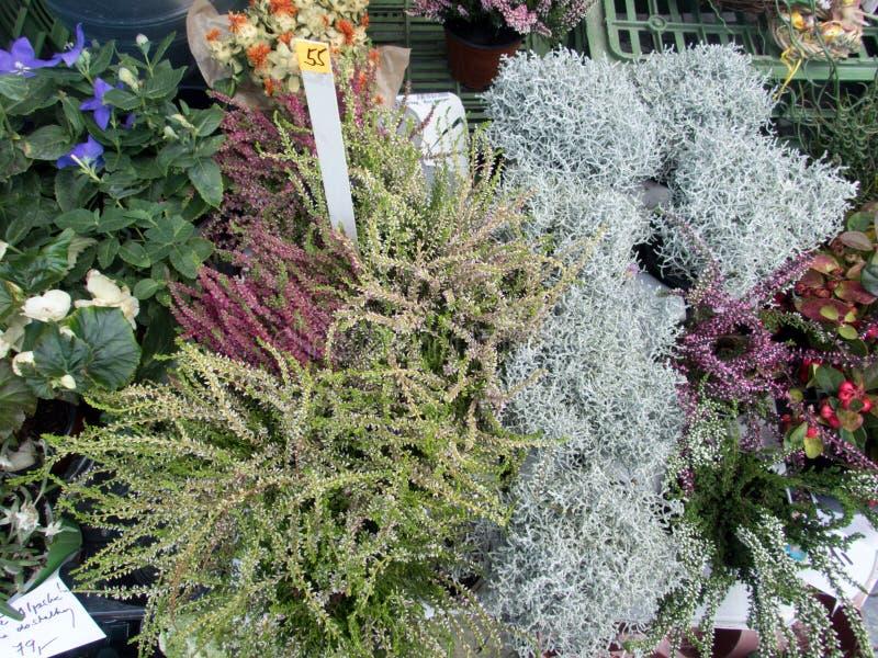 Bloeiende heide en gemengde bloemen stock foto's