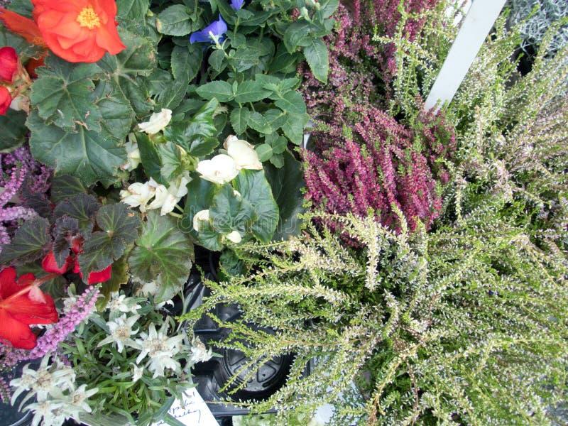 Bloeiende heide en gemengde bloemen royalty-vrije stock foto's