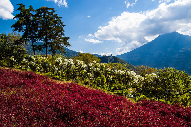 Bloeiende Helling & Volcano View stock foto's