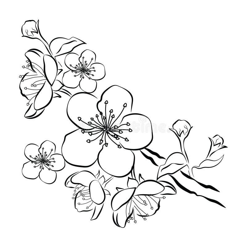Bloeiende kers Sakuratak met bloemknoppen Zwart-witte tekening van een tot bloei komende boom in de lente Embleem met stock illustratie