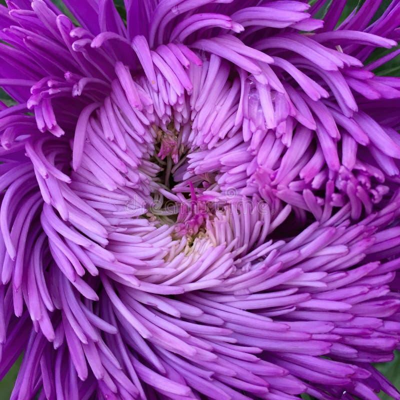 Bloeiende mooie bloem met groene bladeren, het leven natuurlijke aard stock fotografie