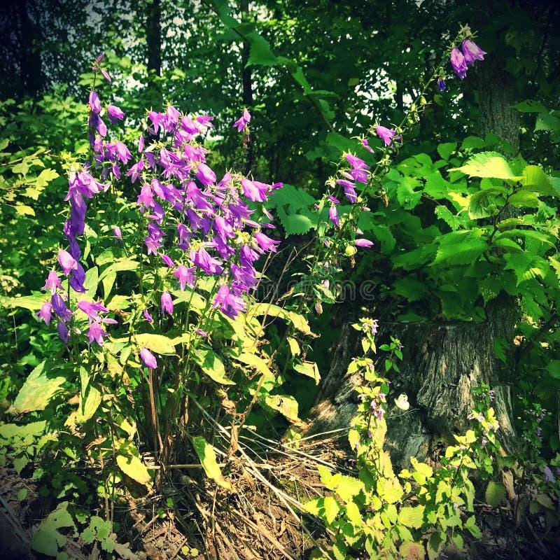 Bloeiende mooie bloem met groene bladeren, het leven natuurlijke aard royalty-vrije stock afbeelding
