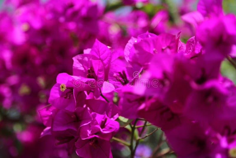 Bloeiende mooie bloem met groene bladeren, het leven natuurlijke aard stock foto's