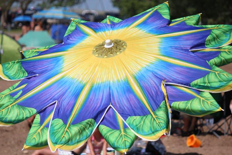 Bloeiende Paraplu stock fotografie