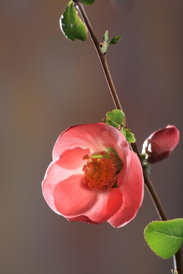 Bloeiende rode bloem royalty-vrije stock foto