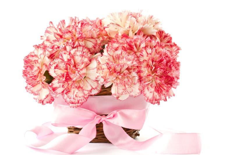 Bloeiende roze anjer stock afbeeldingen