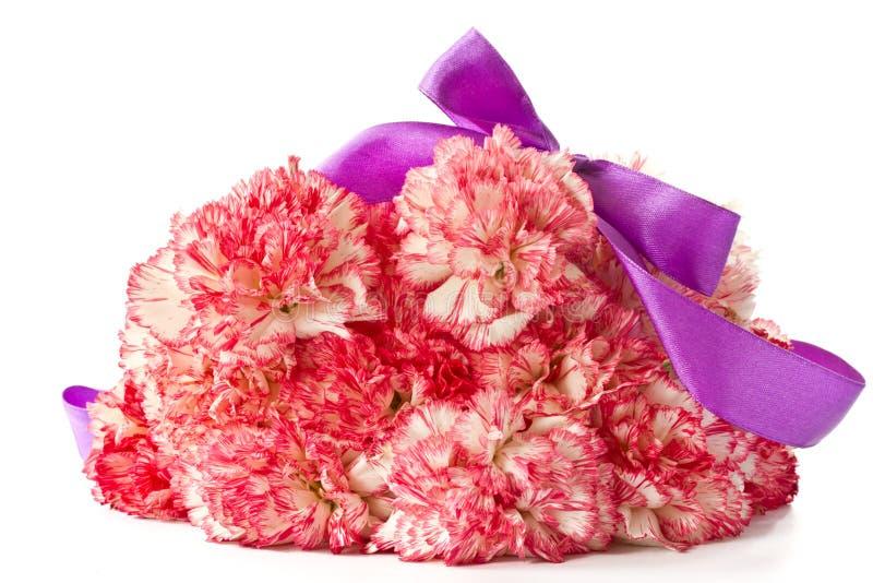 Bloeiende roze anjer royalty-vrije stock foto's