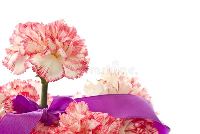 Bloeiende roze anjer stock foto's