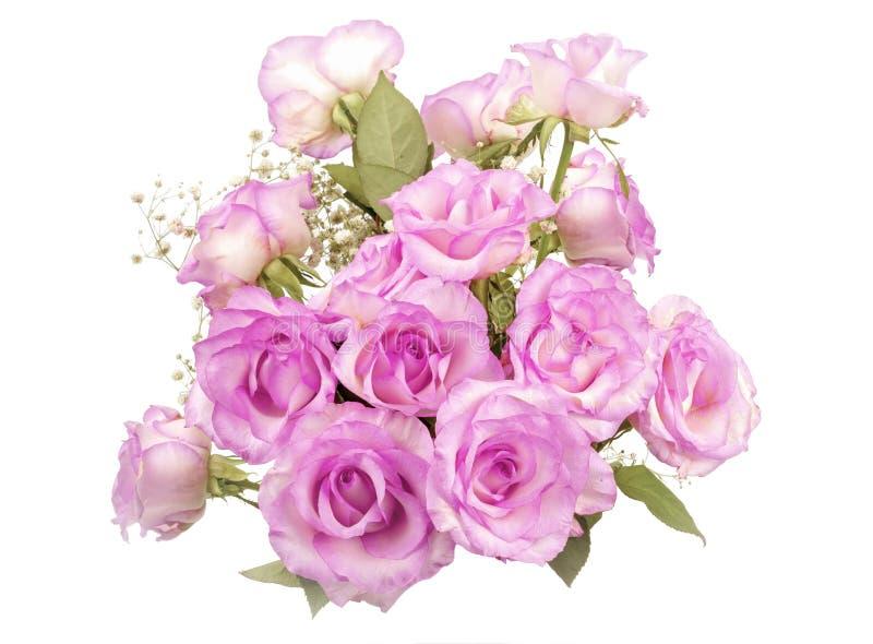 Bloeiende roze rozen royalty-vrije stock afbeelding