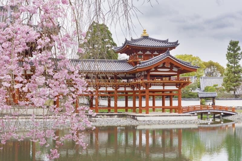 Bloeiende sakuraboom in byodo-in Boeddhistische tempel royalty-vrije stock foto