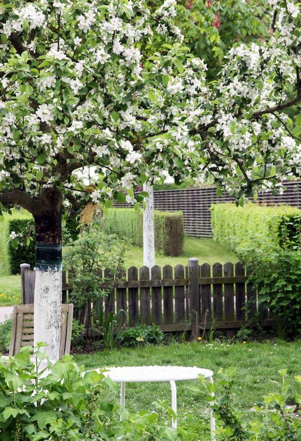 Bloeiende sierappelboom in siertuin royalty-vrije stock afbeelding