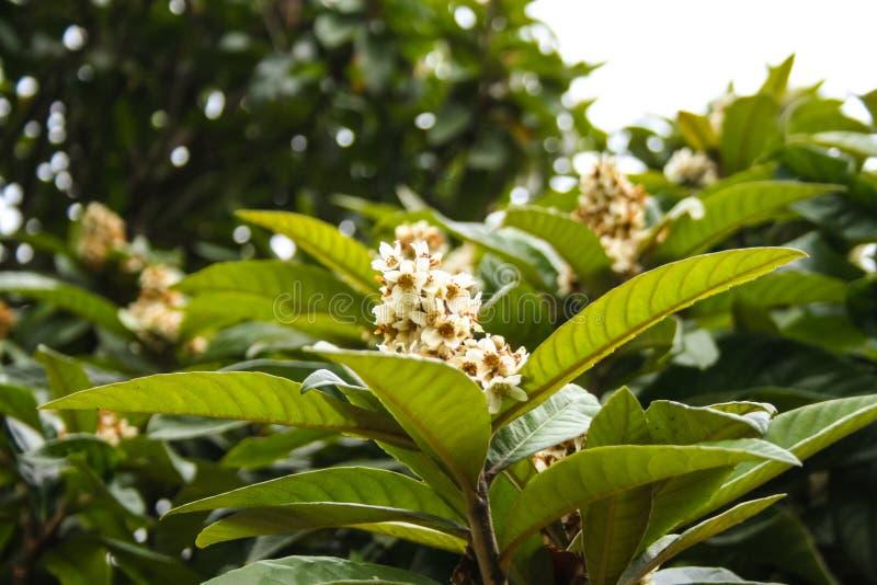 Bloeiende tropische boom stock afbeelding