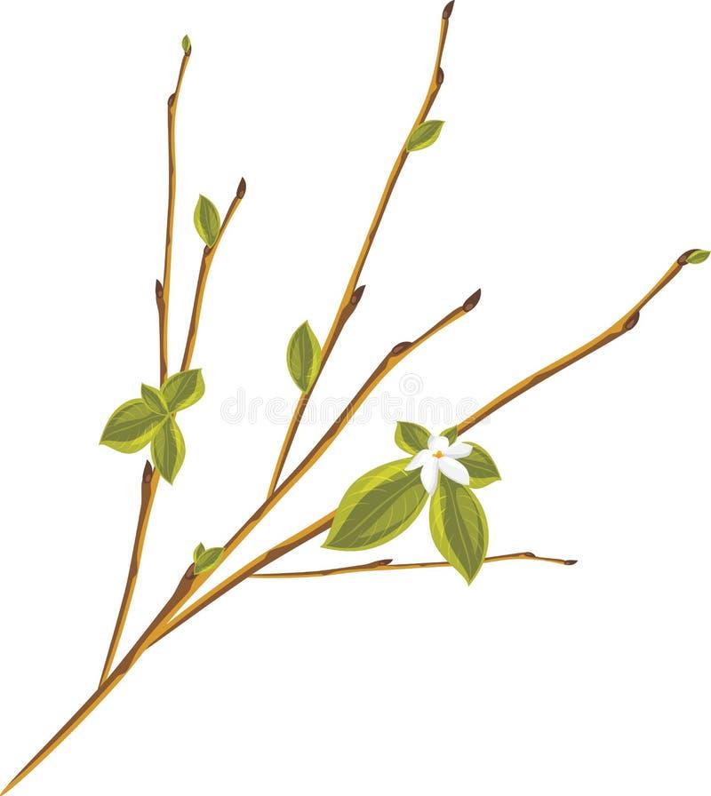Download Bloeiende Twijg Die Op De Witte Achtergrond Wordt Geïsoleerd Vector Illustratie - Illustratie bestaande uit botanisch, struik: 29508250