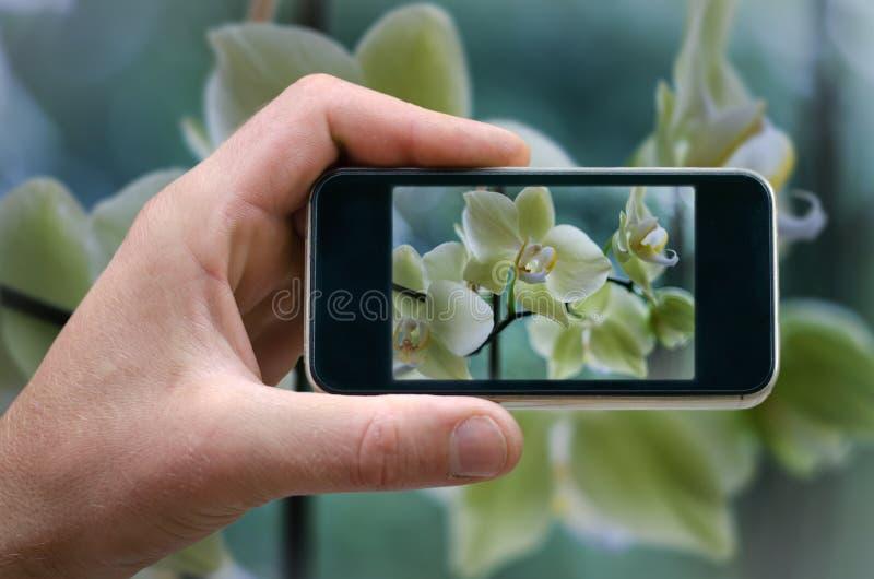 Bloeiende witte orchidee telefoon het in hand mens bloeit fotograferen foto's van uw telefoon, Zelf, fotograferend op de telefoon stock foto