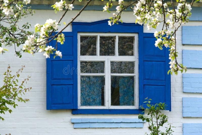 Bloeit dichtbij het venster royalty-vrije stock foto