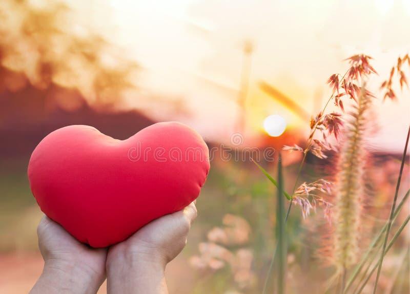 Bloeit het rode hart van de handgreep met romantische aardmening van gras royalty-vrije stock afbeelding