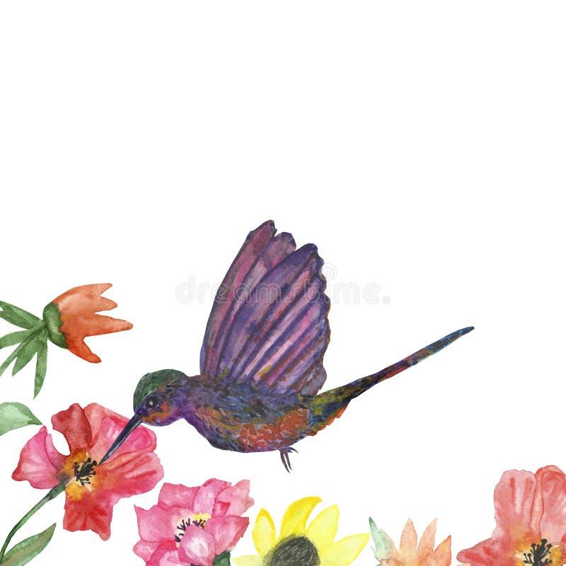 Bloeit het waterverf die tropische patroon met roze hibiscus en Kolibrievogels op witte achtergrond worden geïsoleerd vector illustratie