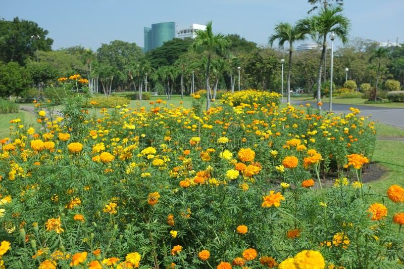 Bloeit nooit afwezigheid in Chatuchak-Park stock foto's