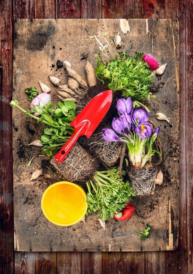 Bloeit potting met rode het tuinieren lepel, wortels en grond, op rustieke houten achtergrond, hoogste mening royalty-vrije stock foto