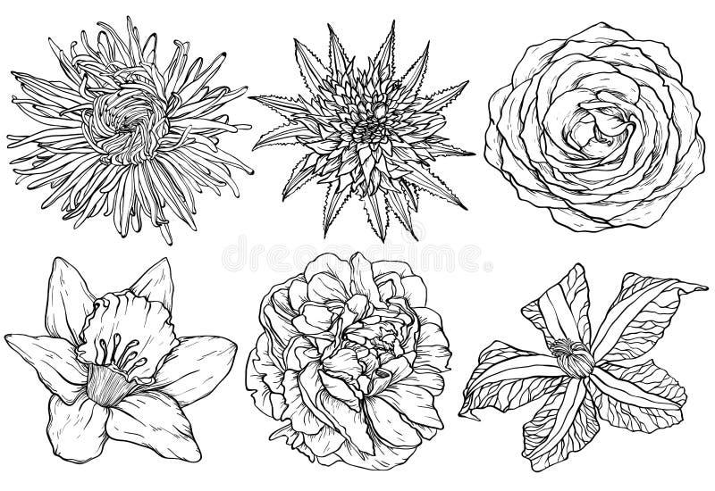 Bloeit skecth aster, nam, clematissen, scharlaken narcissen toe, pioen stock illustratie
