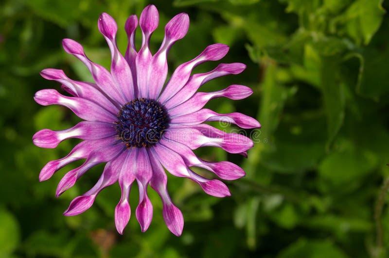 Bloem 24 van de tuin royalty-vrije stock afbeeldingen