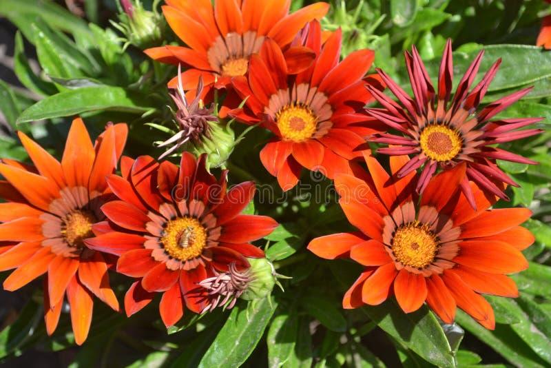 bloem, aard, bloemen, bloemknop, knop, zonnebloem, de zomer, bloemblaadje, flora, landbouw, macro, madeliefje, geweven ontwerp, stock afbeeldingen