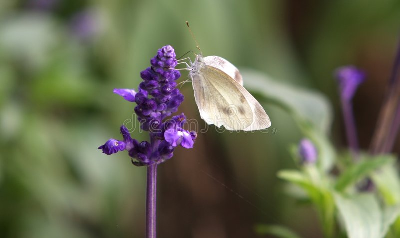 Bloem & vlinder stock fotografie