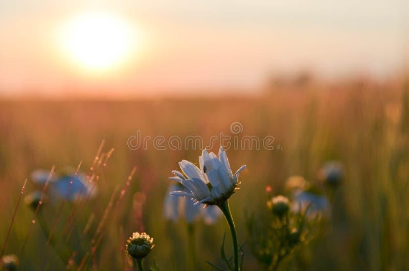 Bloem bij zonsopgang royalty-vrije stock foto's