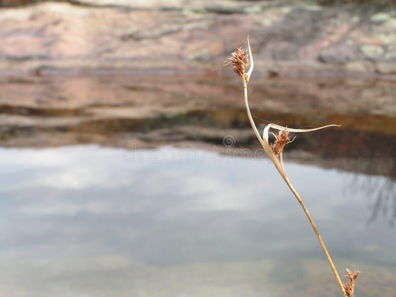 bloem bloei tegen water royalty-vrije stock foto's