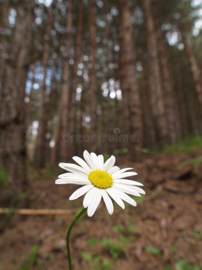 Bloem in bos stock afbeeldingen