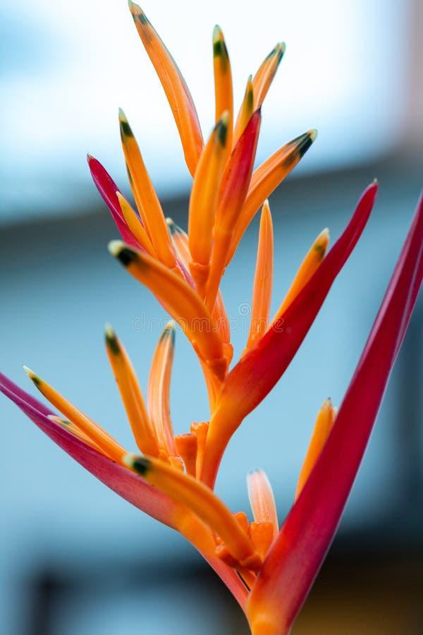 Bloem in de botanische tuin van Rio de Janeiro Brazil stock afbeelding