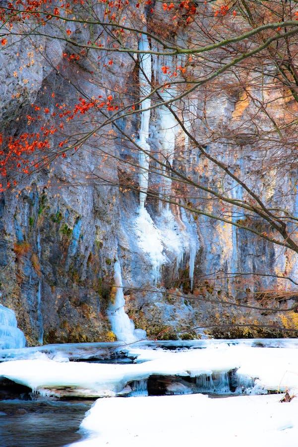 Bloem in de sneeuw stock foto