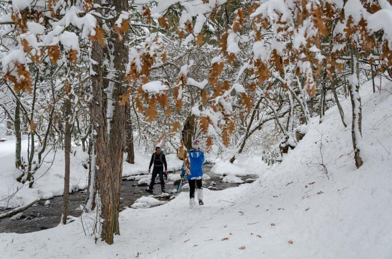 Bloem in de sneeuw De wandelaars hikking in de winterbos stock foto