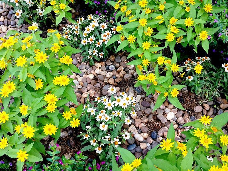 Bloem in de tuin royalty-vrije stock afbeelding